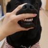 ☆「歯科検診」・「猫健診」のお知らせ☆
