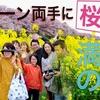 DJI Mavic Pro 4k ドローン 空撮『ドローン両手に桜満開の旅』権現堂公園
