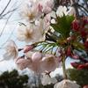 メルボルンに春が来た