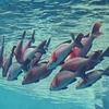 春の沖縄! その② ~美ら海水族館・海洋博公園・古宇利大橋・古宇利島など~【徒然日記・旅行記】