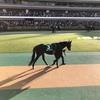東京競馬11R 東京新聞杯 パドック直前予想 ◎3 サトノアレス