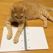 第150回日商簿記2級試験直前!なのに簿記2級の問題が解けなくて心が折れまくる。