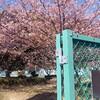 #805 コロナ禍の春