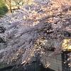 三木清の花見