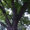 木が宿すもの