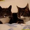 本日のねこ様/The two talking cats