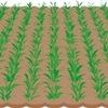 農地の相続税を計算する
