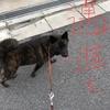 甲斐犬サンの教えてくれるコト〜犬生ッテ双六ミタイナモンサ‼︎♪(´ε` )♬