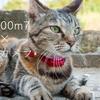 ソニーRX100m7(RX100Ⅶ)は最強のネコカメラ!手軽に始めるならオススメ