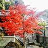 祇園周辺の紅葉②観光24...過去20181201