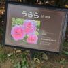 うららチャン(*^_^*) 京成バラ園 2016/05/16