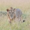 8月8日はライオンズゲートが開く!と巷で言われていますが、、、?スピリチュアル好きでなくてもムーブメントに乗っかろう。