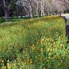 春のお散歩 大阪の長居公園