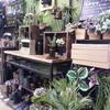 《アーティス地下1階》Love!Vase&green ハンサムカフェ