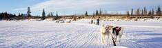 犬ゾリでカナダ・ホワイトホースの凍ったタキーニ川を走る