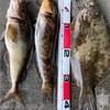 みんなの北海道釣り情報【利尻島】利尻島で良型超大漁!