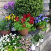 5月の庭  〜わが家の花たち〜