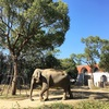 癒される動物園。1歳児の子連れでよこはま動物園ズーラシアへ