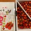 ふるさと納税 山形市 農園より直送!佐藤錦秀L玉1kg