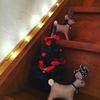Please come home for christmas/プリーズカムホームフォークリスマス