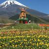 今日の一枚(84) 富士山とチューリップ