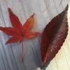 紅葉とスカイツリーが一度に楽しめる向島百花園