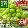 2018年08月16日楽天市場「フルーツ・果物」ランキング -【日本ランキング】