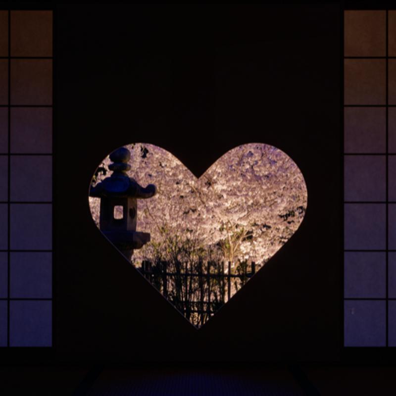 【2021】京都府の夜桜ライトアップ15選〜ロマンチックな夜花見〜