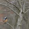 三国町「安島~雄島」で春の鳥見