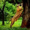 Find Unique Wildlife of Kerala