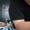 双極性障害と子猫の麻呂様③