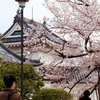 和歌山城天守閣の中はどうなってるの?和歌山城の楽しみ方
