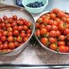 ドライトマトをつくる