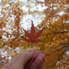 写真のボケ表現:F値が小さいほどよくボケる、その理由を解説