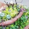ブロークンポットガーデンの再生!普及種やセダムで飾るちまちま寄せにシフト!