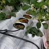 栽培スタイル:植物の水やりを自動化する(水平式パイププランター方式)