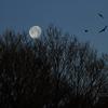 鳥と月と森