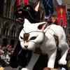 3年に1度のベルギーの奇祭『猫祭り』が13日に開催!楽しい祭りに隠れた起源と悲しい真実は!?
