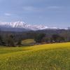 2018/04/22 長野県大町市中山高原 菜の花と北アルプスが見える丘