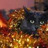君の脳みそと目玉に乾杯!ギャグの通じる人とクリスマスを過ごす方に大ウケの「中西怪奇菓子工房。」発クリスマスケーキに注文殺到!