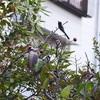 小鳥、ポプリ、洋梨