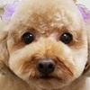 マダニ感染症について(飼い犬から人への感染が報告されました)