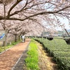 日本緑茶発祥の町! 京都府宇治田原町(31/1741)