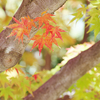 白鳥庭園の色々な紅葉