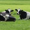 兵庫県で夏休みに牧場で乳しぼりをしたいなら淡路のココ!