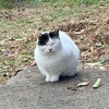 御朱印集め 猫の気持ち24(長岳寺にて)
