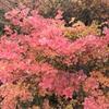 三重県の紅葉スポット『御在所岳』に行ってきた