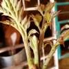 菅平高原の山菜が美味しいからといって、調子に乗るのは良くない。