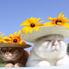 ゴールデンウイーク猫のイベントおすすめは?