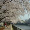 京都・ご近所の桜風景